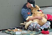 Σκύλοι με άστεγους ιδιοκτήτες (3)
