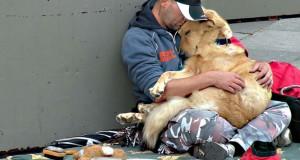 Σκύλοι με άστεγους ιδιοκτήτες σε 15 δυνατές φωτογραφίες