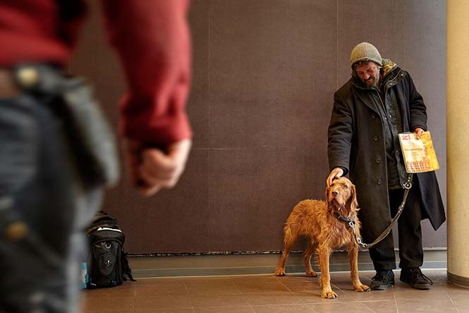 Σκύλοι με άστεγους ιδιοκτήτες (6)