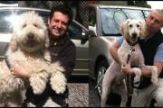 Σκύλοι που μεταμορφώθηκαν με ένα κούρεμα (9)