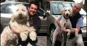 18 σκύλοι που μεταμορφώθηκαν με ένα κούρεμα