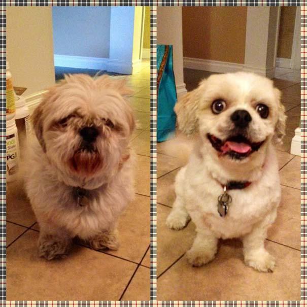 Σκύλοι που μεταμορφώθηκαν με ένα κούρεμα (15)