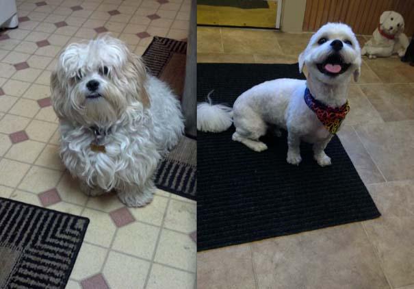 Σκύλοι που μεταμορφώθηκαν με ένα κούρεμα (16)
