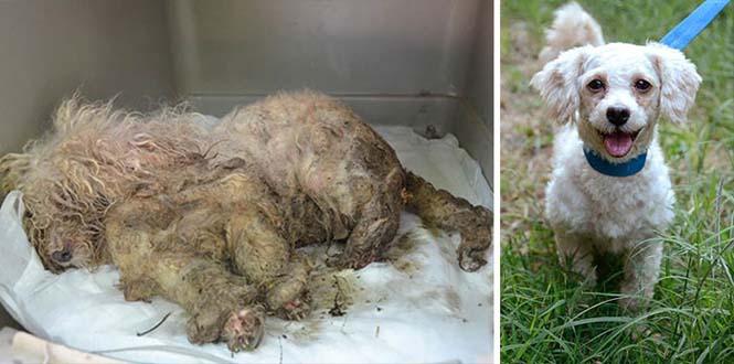 Σκύλοι πριν και μετά τη διάσωση τους (5)