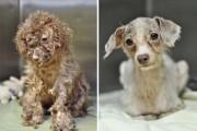 Σκύλοι πριν και μετά τη διάσωση τους (6)