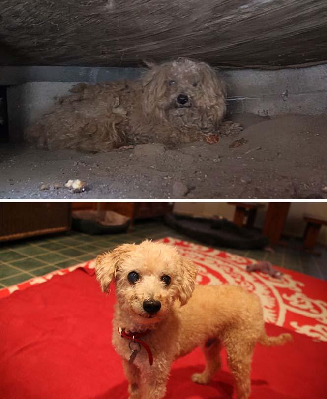 Σκύλοι πριν και μετά τη διάσωση τους (13)