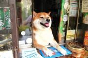 Σκύλος περιπτεράς (3)