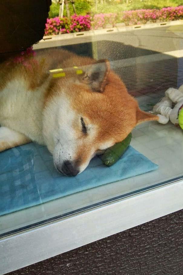 Σκύλος περιπτεράς (5)