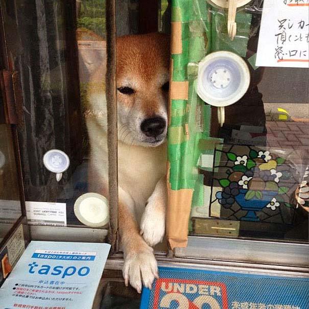 Σκύλος περιπτεράς (7)