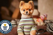 Ο σκύλος που μπήκε στα ρεκόρ Guinness για έναν απίθανο λόγο