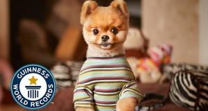 Ο σκύλος που μπήκε στα ρεκόρ Guinness για έναν απίθανο λόγο (Video)