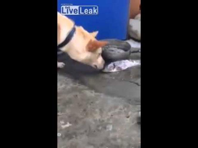 Σκύλος προσπαθεί να σώσει ψάρια έξω από το νερό