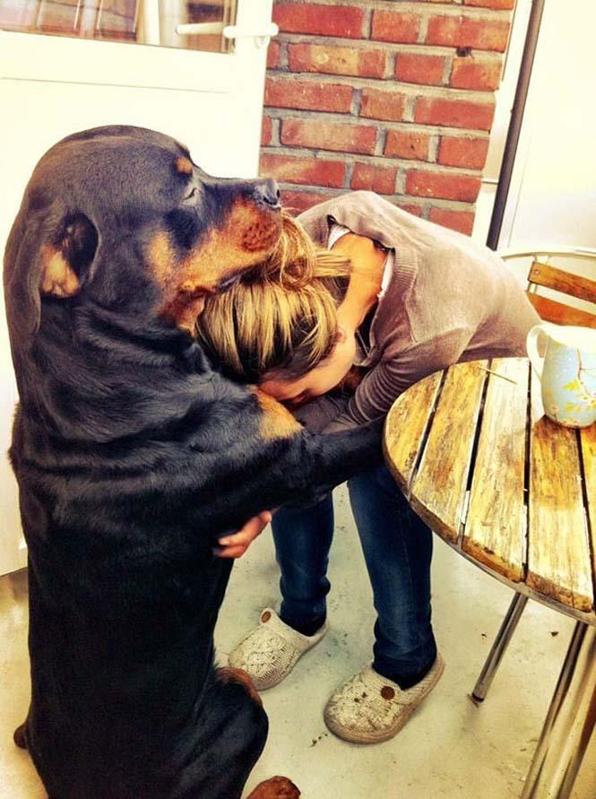Υπέροχες φωτογραφίες σκύλων που αγκαλιάζουν τον άνθρωπο τους (2)