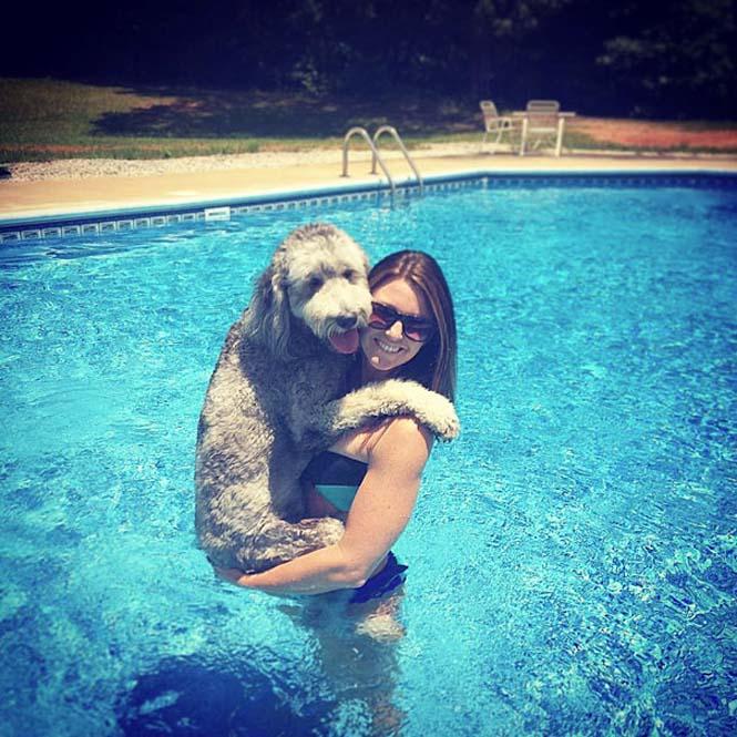Υπέροχες φωτογραφίες σκύλων που αγκαλιάζουν τον άνθρωπο τους (4)