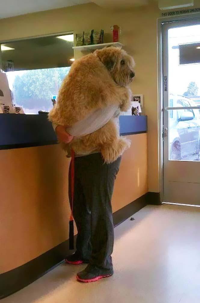 Υπέροχες φωτογραφίες σκύλων που αγκαλιάζουν τον άνθρωπο τους (6)