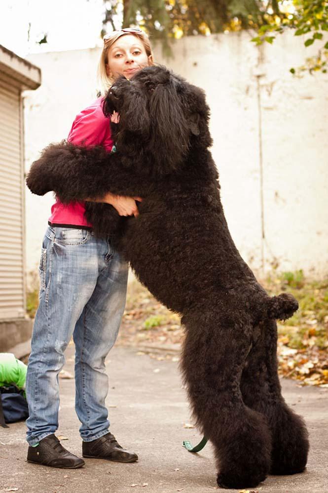 Υπέροχες φωτογραφίες σκύλων που αγκαλιάζουν τον άνθρωπο τους (13)
