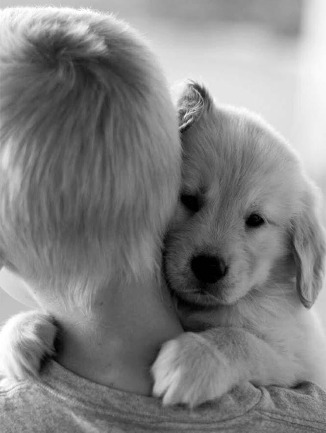Υπέροχες φωτογραφίες σκύλων που αγκαλιάζουν τον άνθρωπο τους (19)