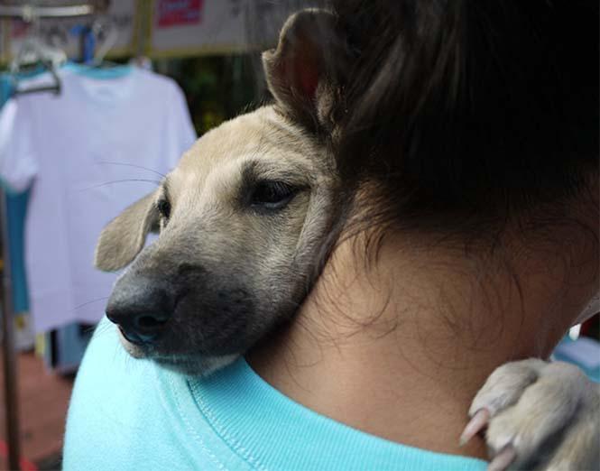 Υπέροχες φωτογραφίες σκύλων που αγκαλιάζουν τον άνθρωπο τους (20)