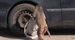 Κλέφτες από το ζωικό βασίλειο που… θα κλέψουν την καρδιά σας! (Video)