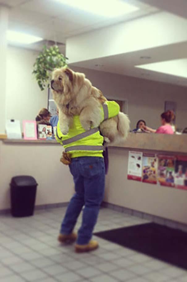 Ζώα που δεν χαίρονται με την επίσκεψη στον κτηνίατρο (2)