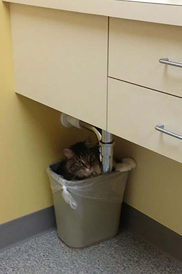 Ζώα που δεν χαίρονται με την επίσκεψη στον κτηνίατρο (3)