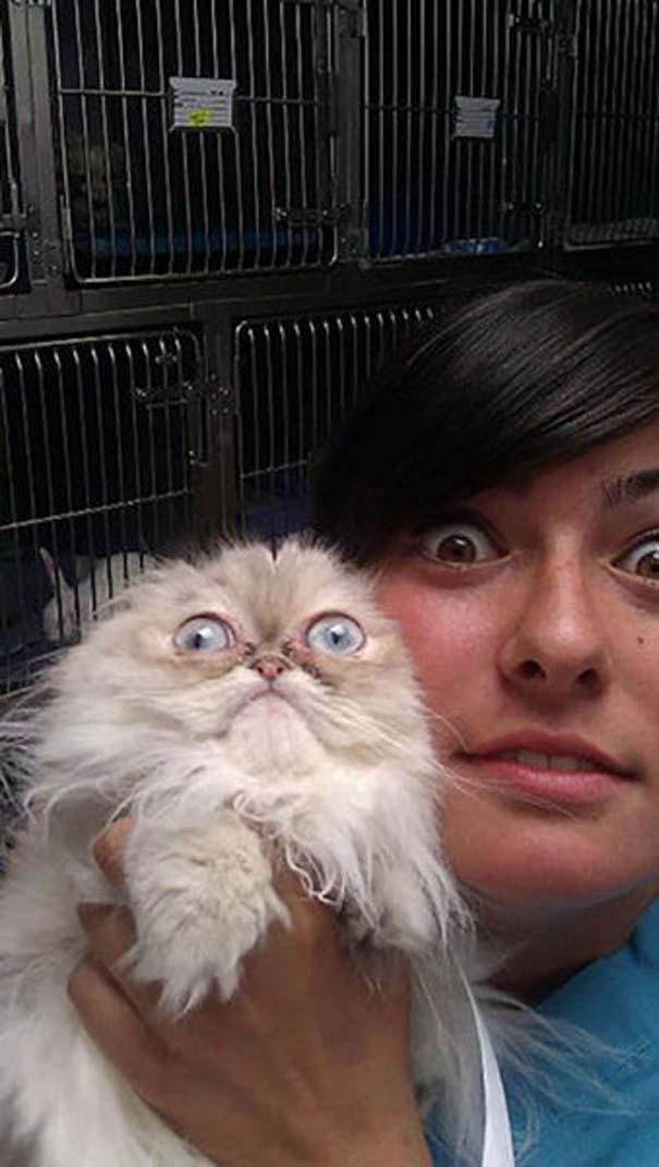 Ζώα που δεν χαίρονται με την επίσκεψη στον κτηνίατρο (5)