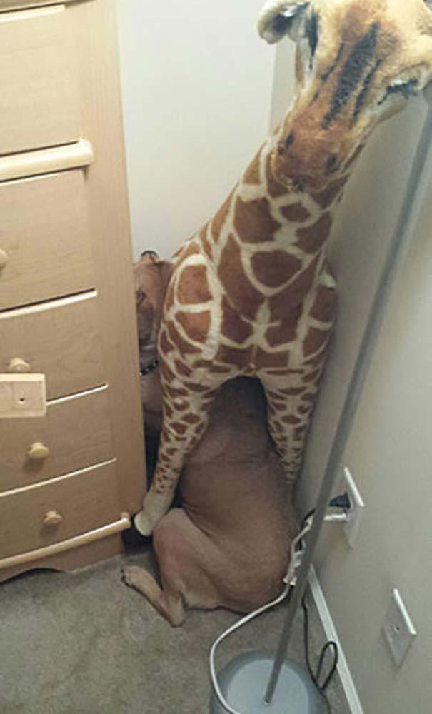 Ζώα που δεν χαίρονται με την επίσκεψη στον κτηνίατρο (11)