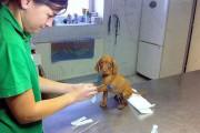 Ζώα που δεν χαίρονται με την επίσκεψη στον κτηνίατρο (18)