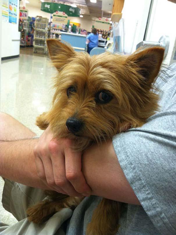 Ζώα που δεν χαίρονται με την επίσκεψη στον κτηνίατρο (20)