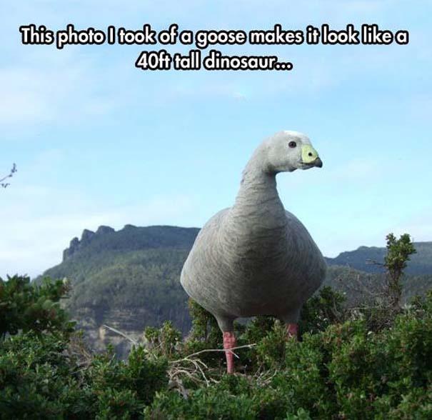 Αστείες φωτογραφίες από παράξενη γωνία λήψης (14)