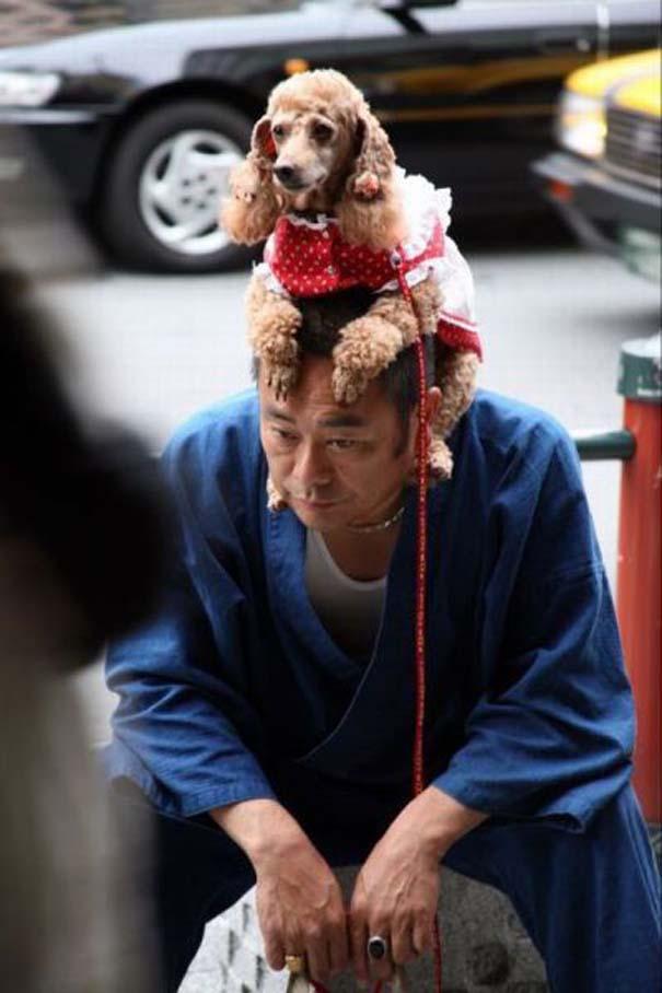 Εν τω μεταξύ, στην Ιαπωνία... (1)