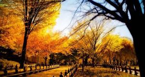 Το Φθινόπωρο μέσα από 25 εντυπωσιακές φωτογραφίες