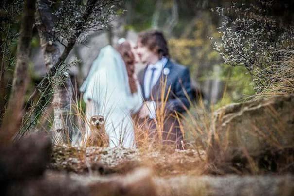 Γαμήλια photobombs (3)