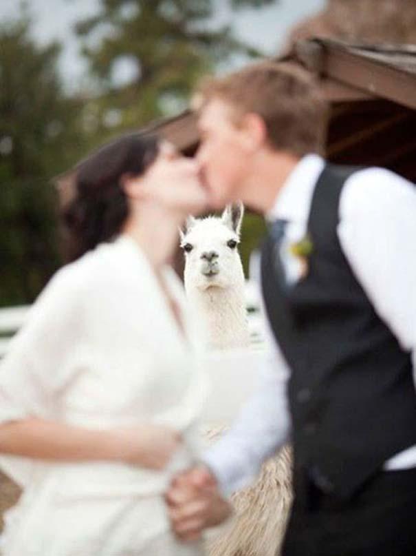 Γαμήλια photobombs (11)