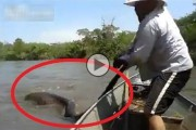 Γιγάντιο ανακόντα στη Βραζιλία