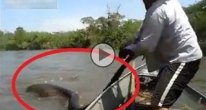 Βραζιλιάνοι βρήκαν ένα από τα μεγαλύτερα ανακόντα… και αποφάσισαν να το παρενοχλήσουν (Video)