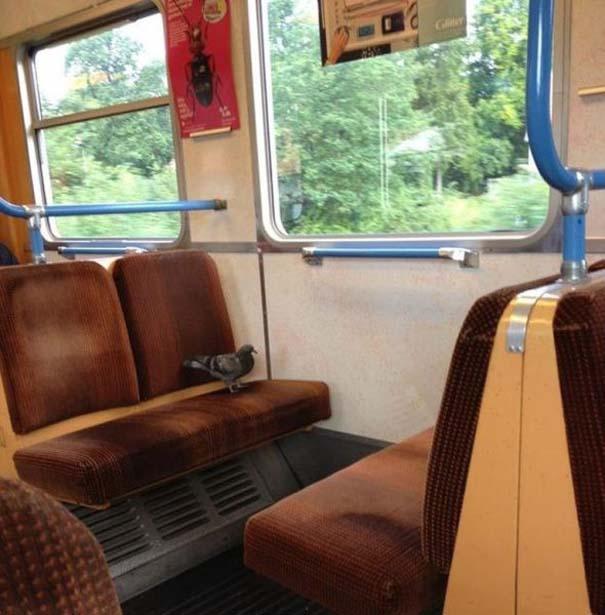 Παράξενες και κωμικοτραγικές φωτογραφίες στα μέσα μεταφοράς (10)