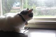 Λυπημένη γάτα στο παράθυρο