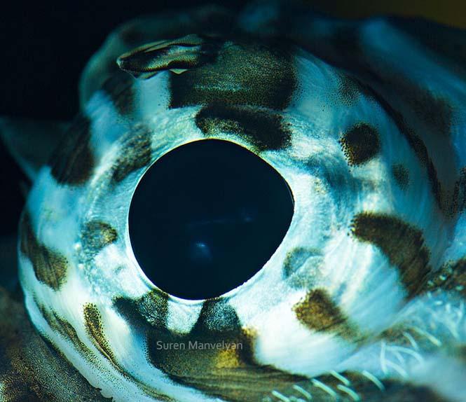Μάτια ζώων σε macro φωτογραφίες (12)