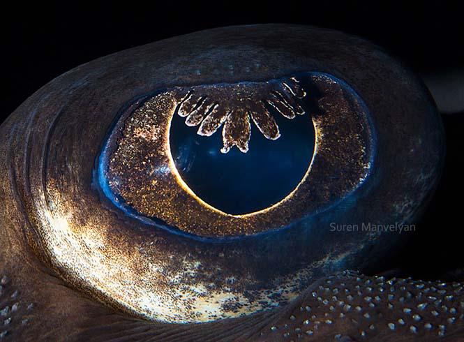 Μάτια ζώων σε macro φωτογραφίες (11)