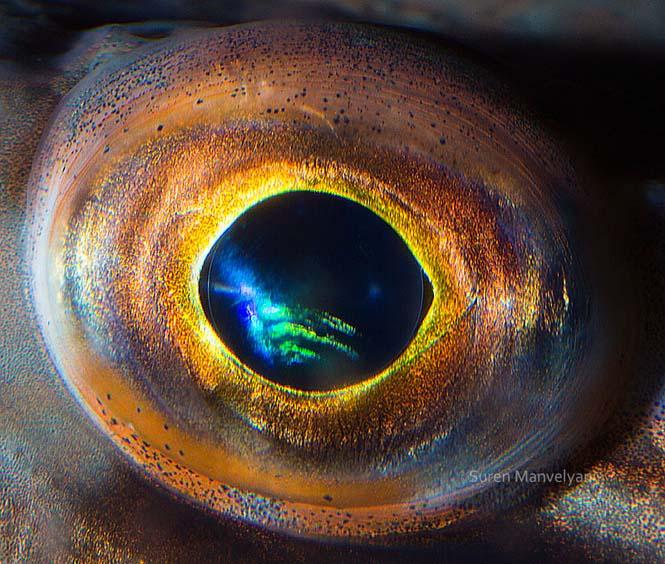 Μάτια ζώων σε macro φωτογραφίες (9)