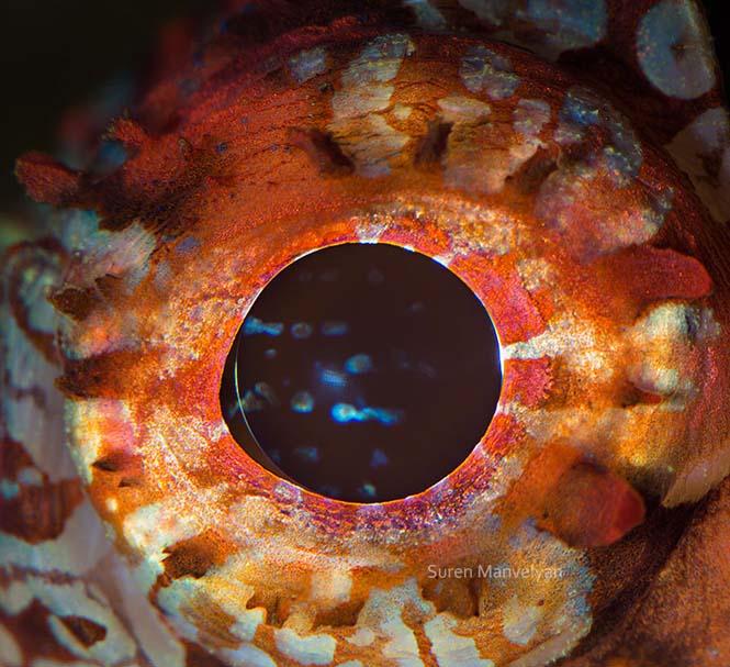 Μάτια ζώων σε macro φωτογραφίες (4)