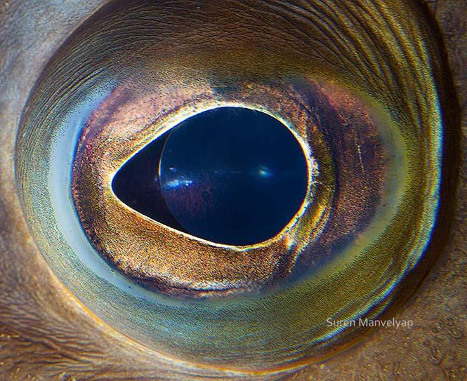 Μάτια ζώων σε macro φωτογραφίες (6)