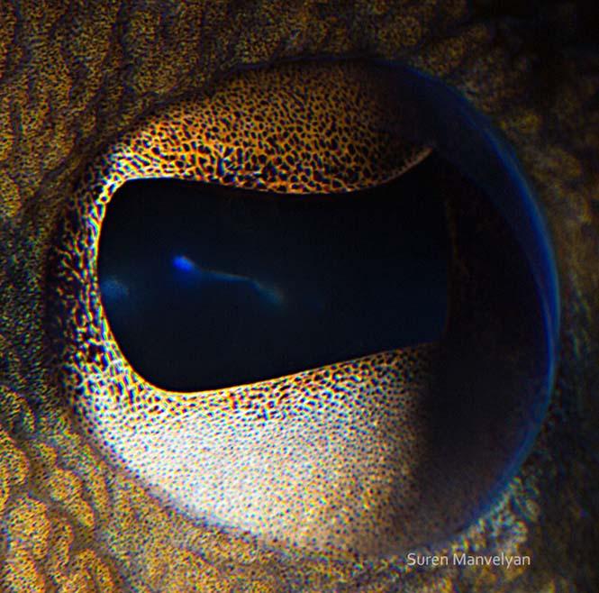 Μάτια ζώων σε macro φωτογραφίες (13)
