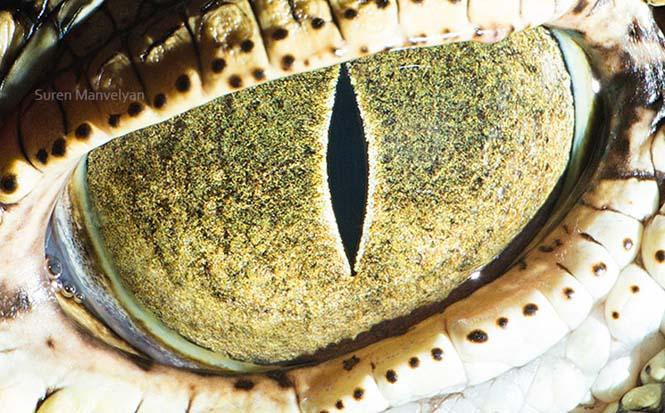 Μάτια ζώων σε macro φωτογραφίες (5)