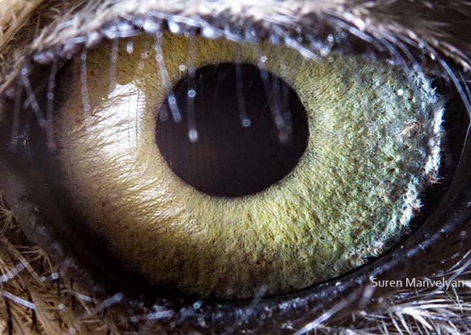 Μάτια ζώων σε macro φωτογραφίες (10)