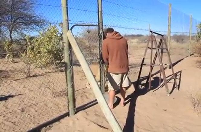 Μια μεγάλη λιονταρίσια αγκαλιά