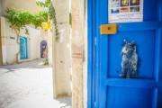Νησί στην Τυνησία με τέχνη του δρόμου (6)