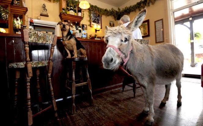 Μια γαϊδούρα σε μπαρ | Φωτογραφία της ημέρας