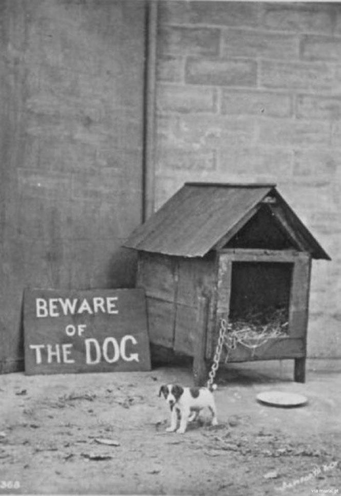 Προσοχή στον σκύλο... | Φωτογραφία της ημέρας